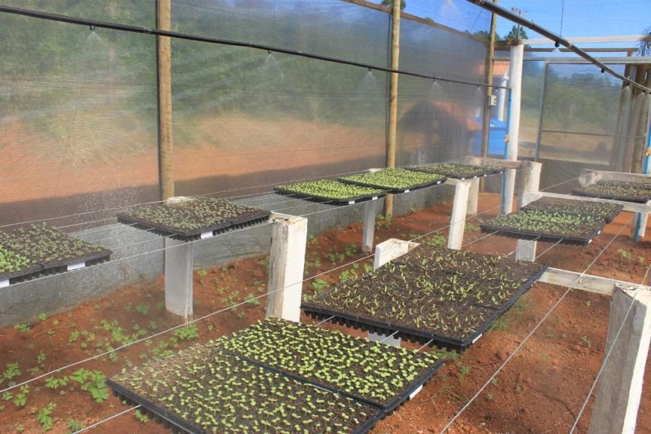 Viveiro Municipal está pronto para produção de bandeja de hortaliças