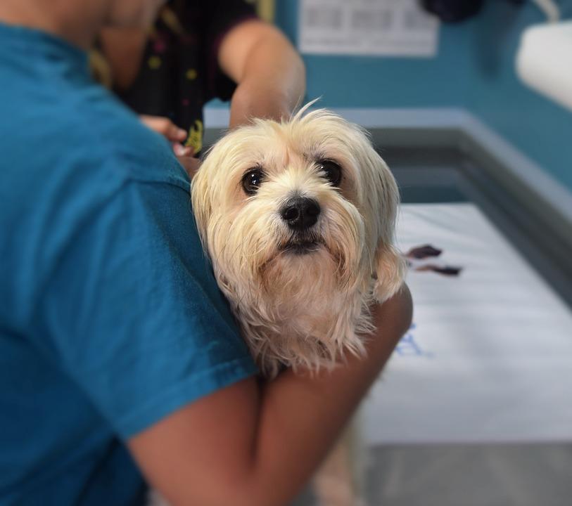 Mutirão de atendimento veterinário gratuito será dia 21 no Jardim Alvorada, em Itararé (SP)