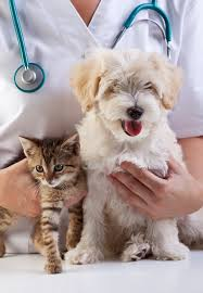 Prefeitura de Itararé (SP) realiza consulta gratuita para animais domésticos hoje (24)