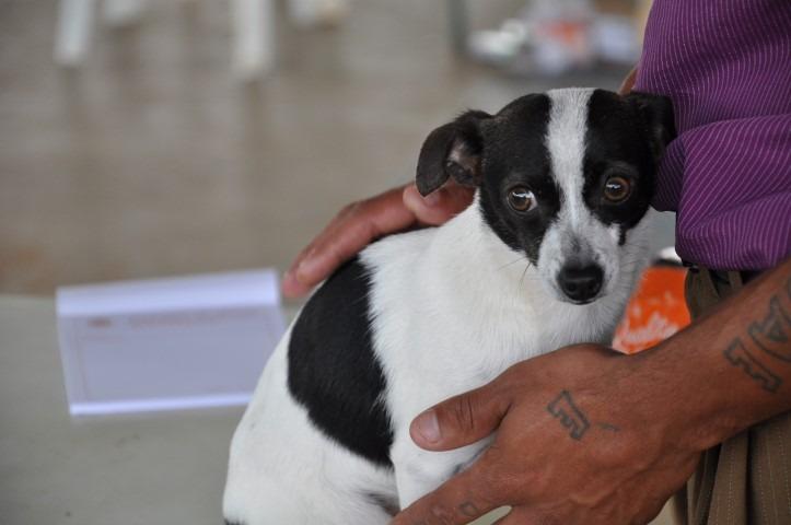 Jardim Paulicéia em Itararé recebe consultas veterinárias gratuitas