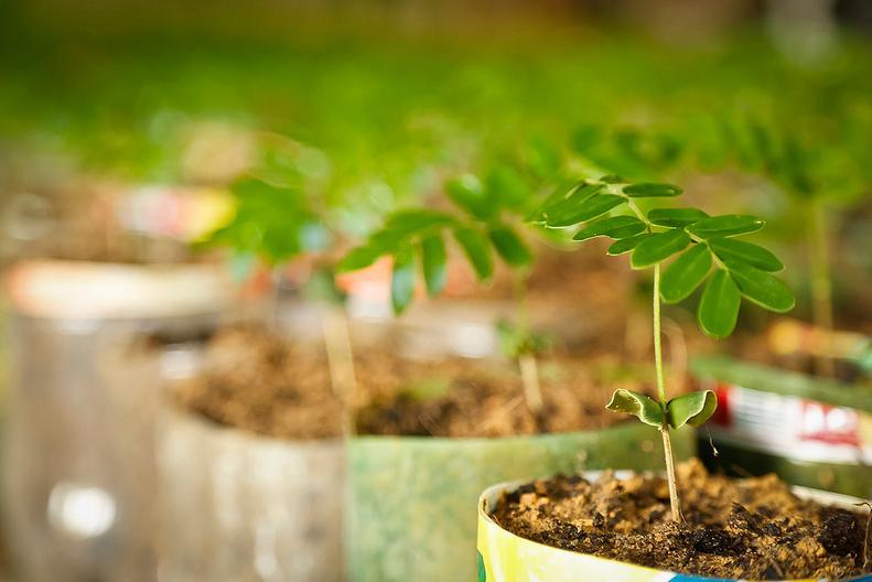 Prefeitura de Itararé (SP) explica: Qual a maneira correta de fazer o plantio de mudas?