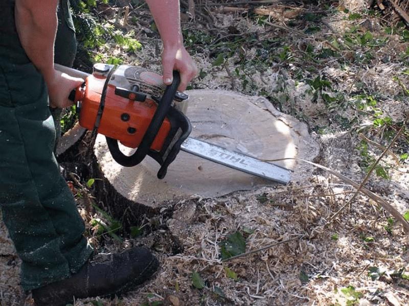 Secretaria de Habitação e Meio Ambiente abre licitação para o serviço de Poda e Corte de Árvores