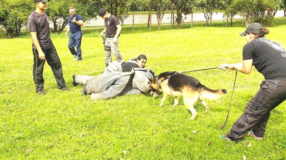 Agentes da GCM participam de curso de obediência canina e proteção