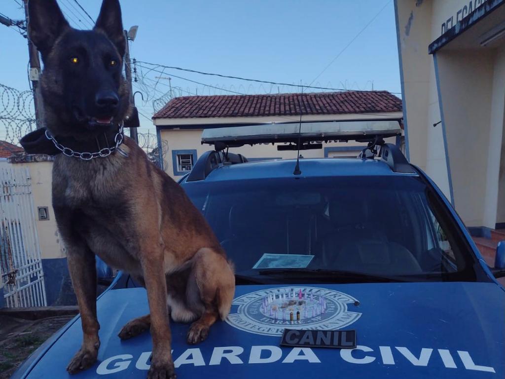 GCM de Itararé (SP) apreende 30 porções de entorpecentes e munição na Vila Novo Horizonte